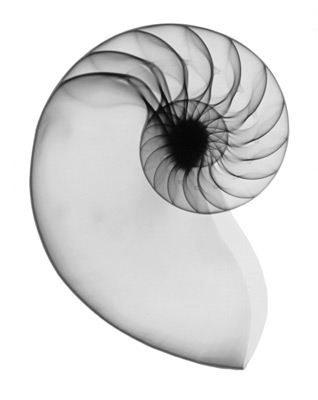 nautilus X-ray art